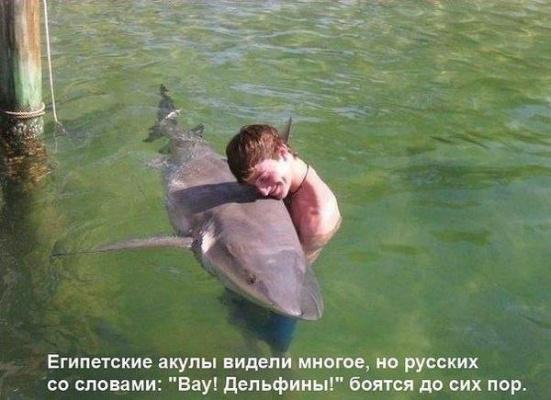 Египетские акулы  в шоке от русских туристов