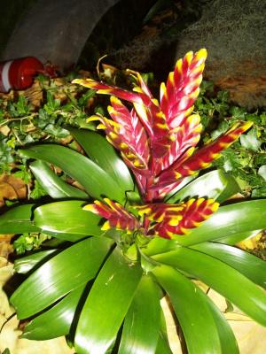 Хайфа,выставка цветов