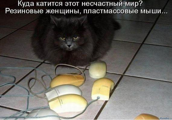 ИЗ ЖИЗНИ КОТОВ !