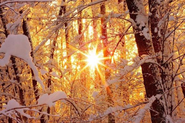 Утро в зимнем лесу.