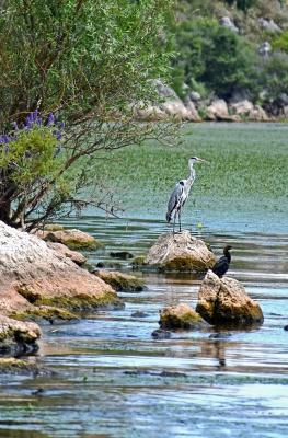Садорское озеро 2