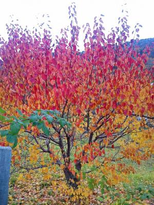 Осень в Саянах