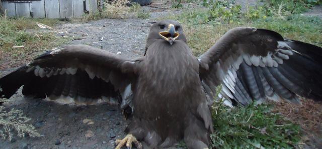 Гордая птица