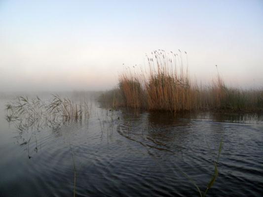 """Раннее утро на озере """"Окунёвка"""""""