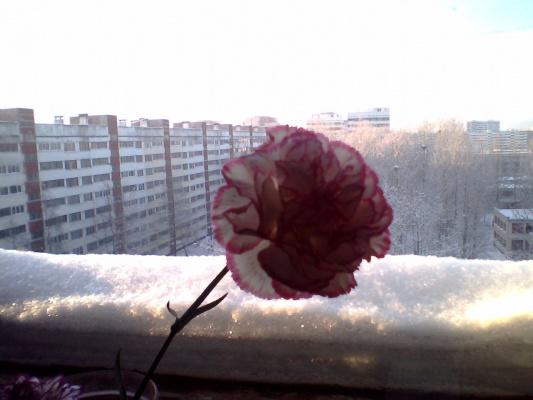 """Обещают """"ледниковый период"""", а нам всё равно)))"""