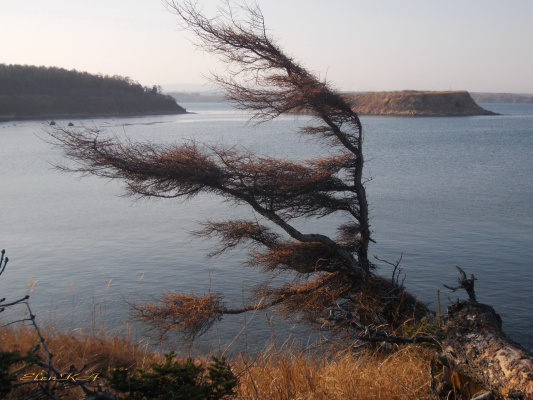 Сформированная ветрами