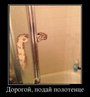Дорогой, подай полотенце