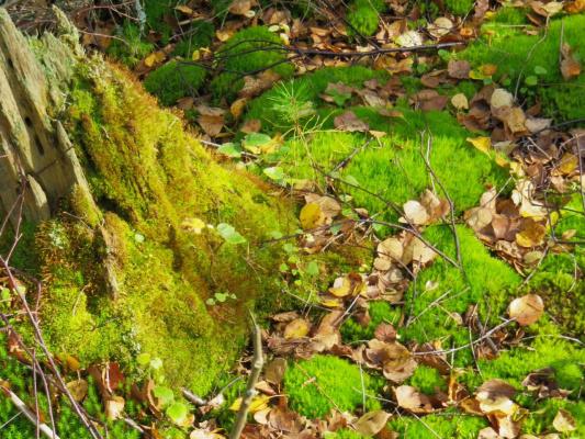Сентябрь в лесу....
