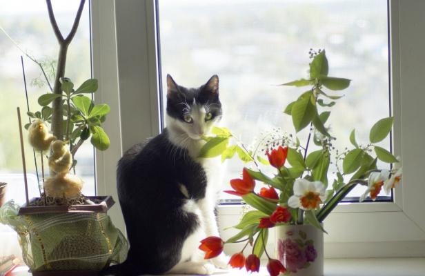 Люблю черемуху в цвету)))