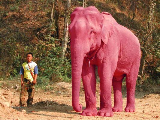 Розовые слоны оказываются бывают.