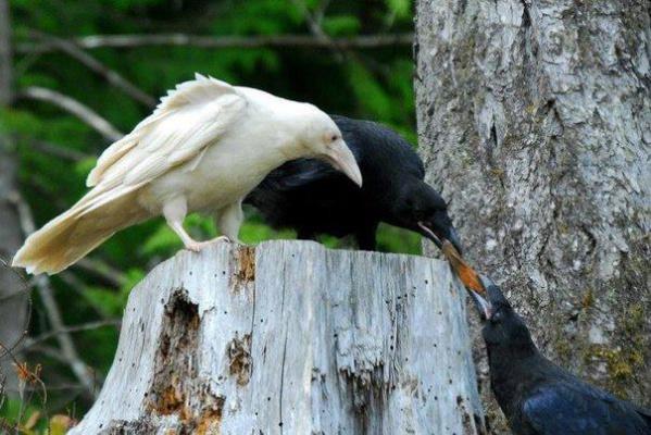 Белая ворона существует !:)
