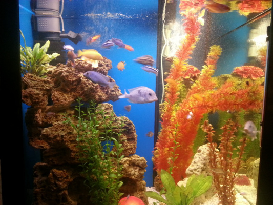 Риби 5