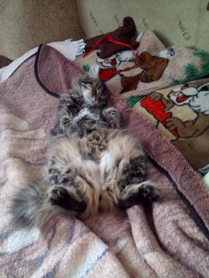 Наша кошка Рэся