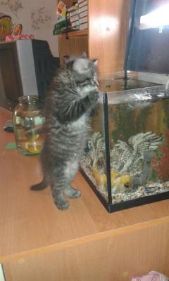 О рыбаках