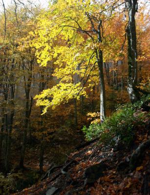 В горы пришла осень!
