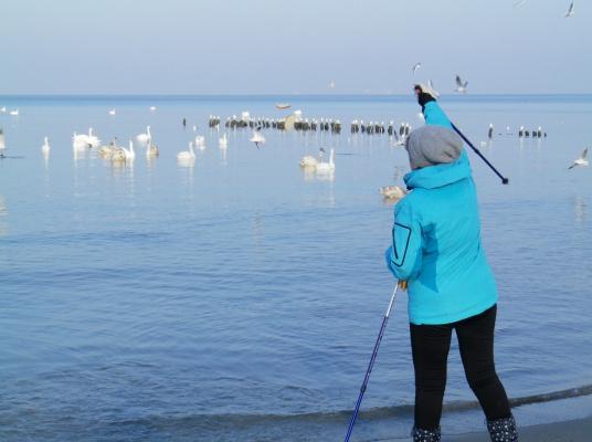 Кормим лебедей на Балтике.