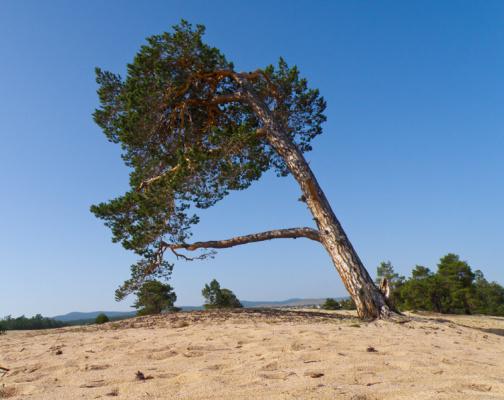Деревья в аномальной зоне