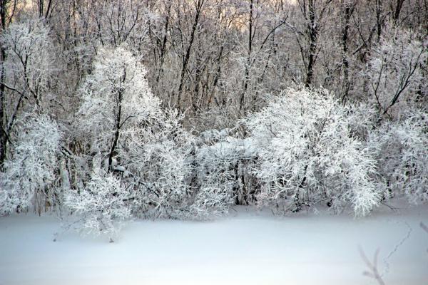 Белое кружево зимы