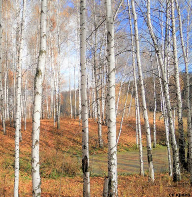 Осень .