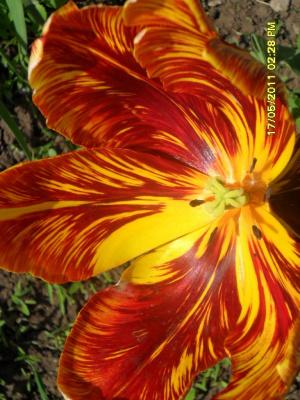 огненый мрамор цветка