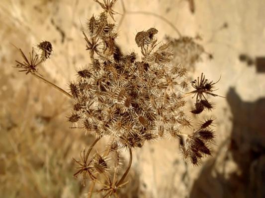 Неизвестный цветок...