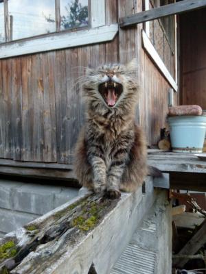 Зевать, так зевать