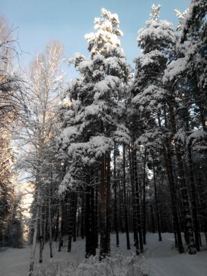 прощай красивая зима