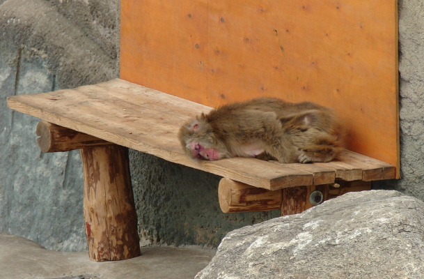 Бомж на отдыхе - (зоопарк)