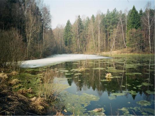 Весна в лесу,апрель...
