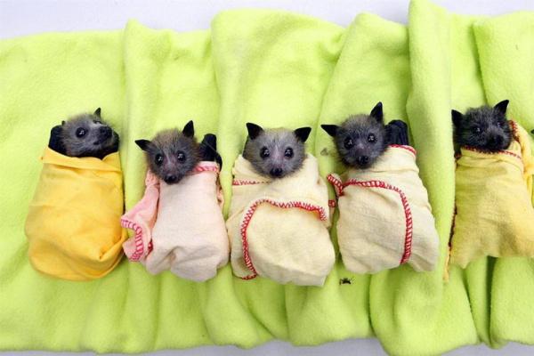 Детский  сад для летучих  мышей