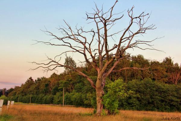 Эстонское дерево