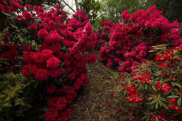 Сад Maple Glen в Новой Зеландии - 5