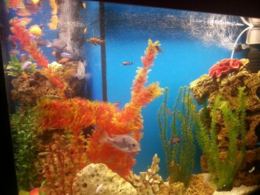 мій акваріум