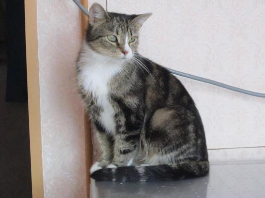 Кошка Соня СПб