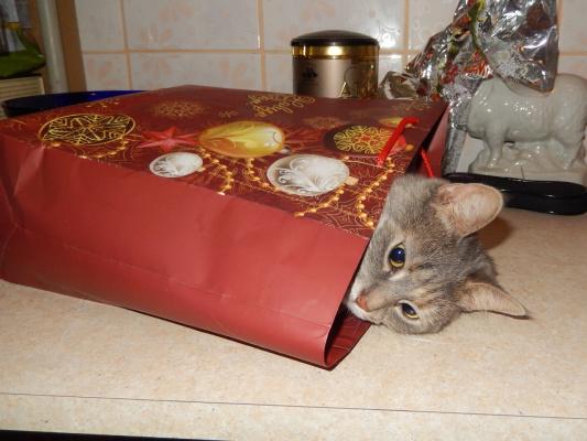 Лучший мой подарок это Муся.