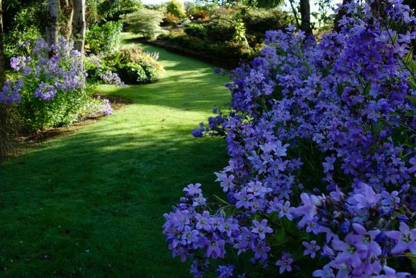 Сад Maple Glen в Новой Зеландии - 8