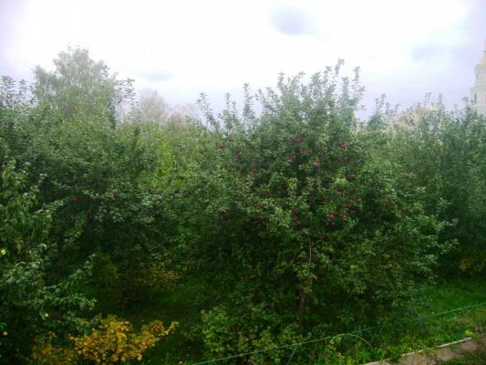 Яблони из Дивеевского сада.