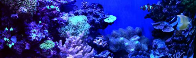 Морской аквариум(панорама)