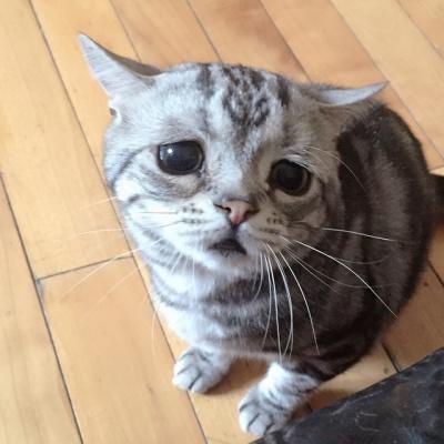 самый-печальный-котик-в-интернете-1