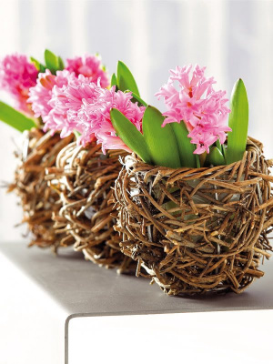 Цветы - очень важная часть домашней атмосферы...