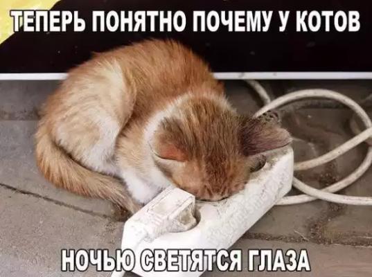 Теперь понятно почему у котов ночью светятся глаза