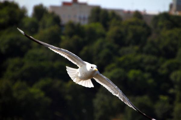 15 Июль 2012 Фото В.Лапин 248