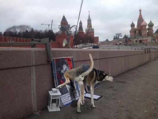 """Чекисткая собака на мосту """"Немцова"""""""
