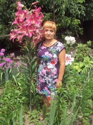 Лилейное дерево