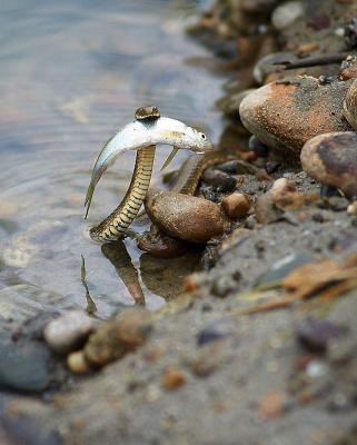 Ловись рыбка...большая и маленькая...