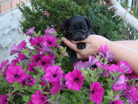И такие цветы тоже бывают :)