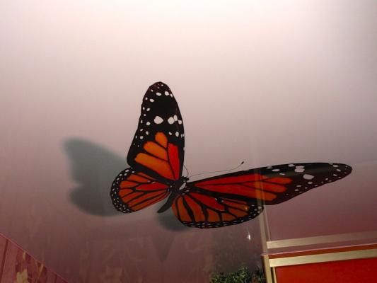 Бабочки на потолке - 4