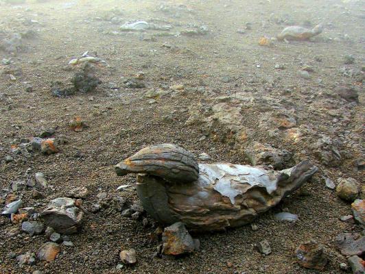 Вулканическая утка