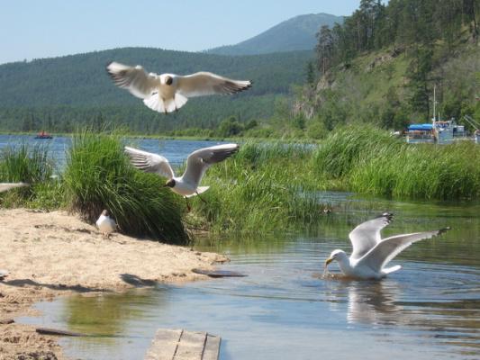 Бухта Монахово, Чивыркуйский залив, Байкал (WellkomBaikal.RU - Отдых на Байкале)