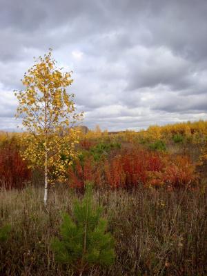 Осенняя пора- очей очарованье